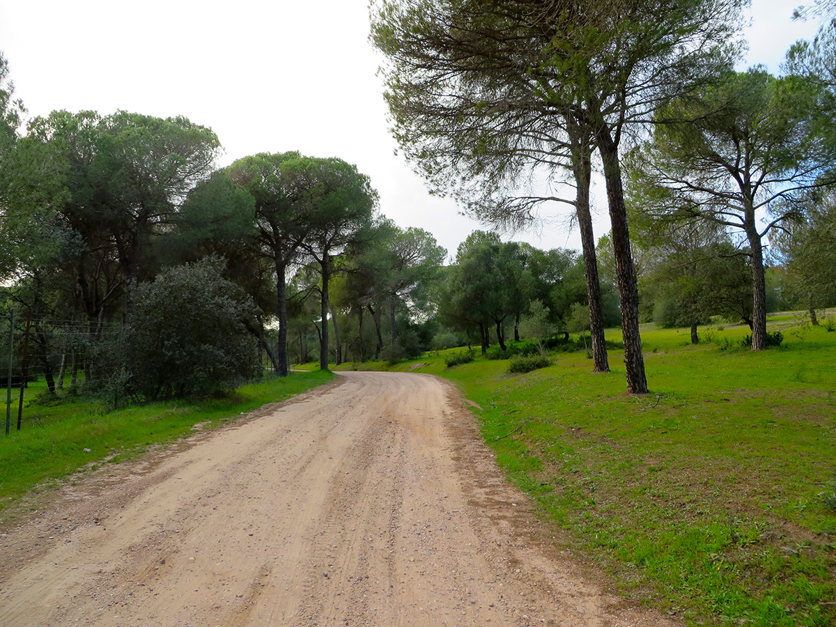 Doñana National Park in Spain by Jets Like Taxis