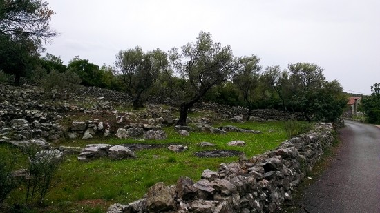 Olive Groves in Lustica, Montenegro by Jets Like Taxis