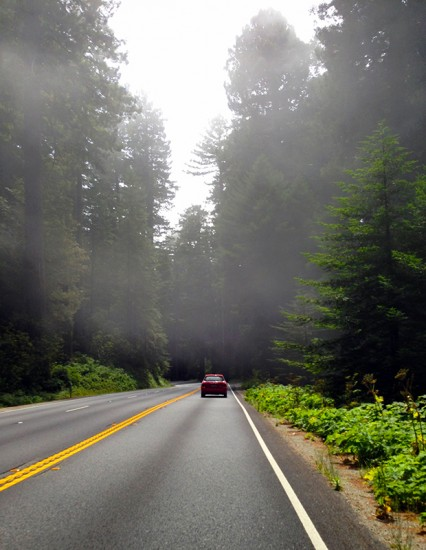 Redwood National Park by Jets Like Taxis