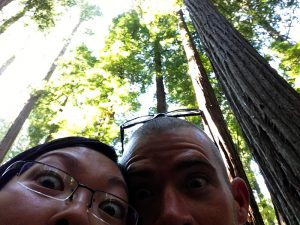 Redwoods by Jets Like Taxis