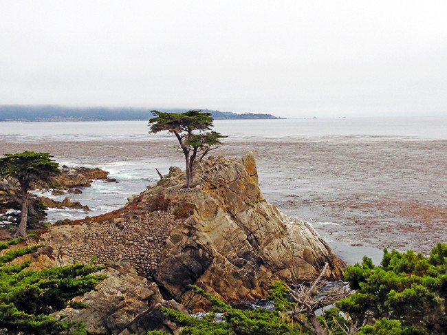 Lone Cypress at Pebble Beach by Jets Like Taxis