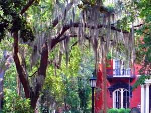Savannah, Georgia by Jets Like Taxis