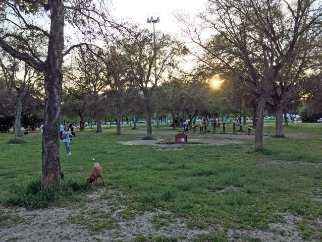Dog Park by Jets Like Taxis