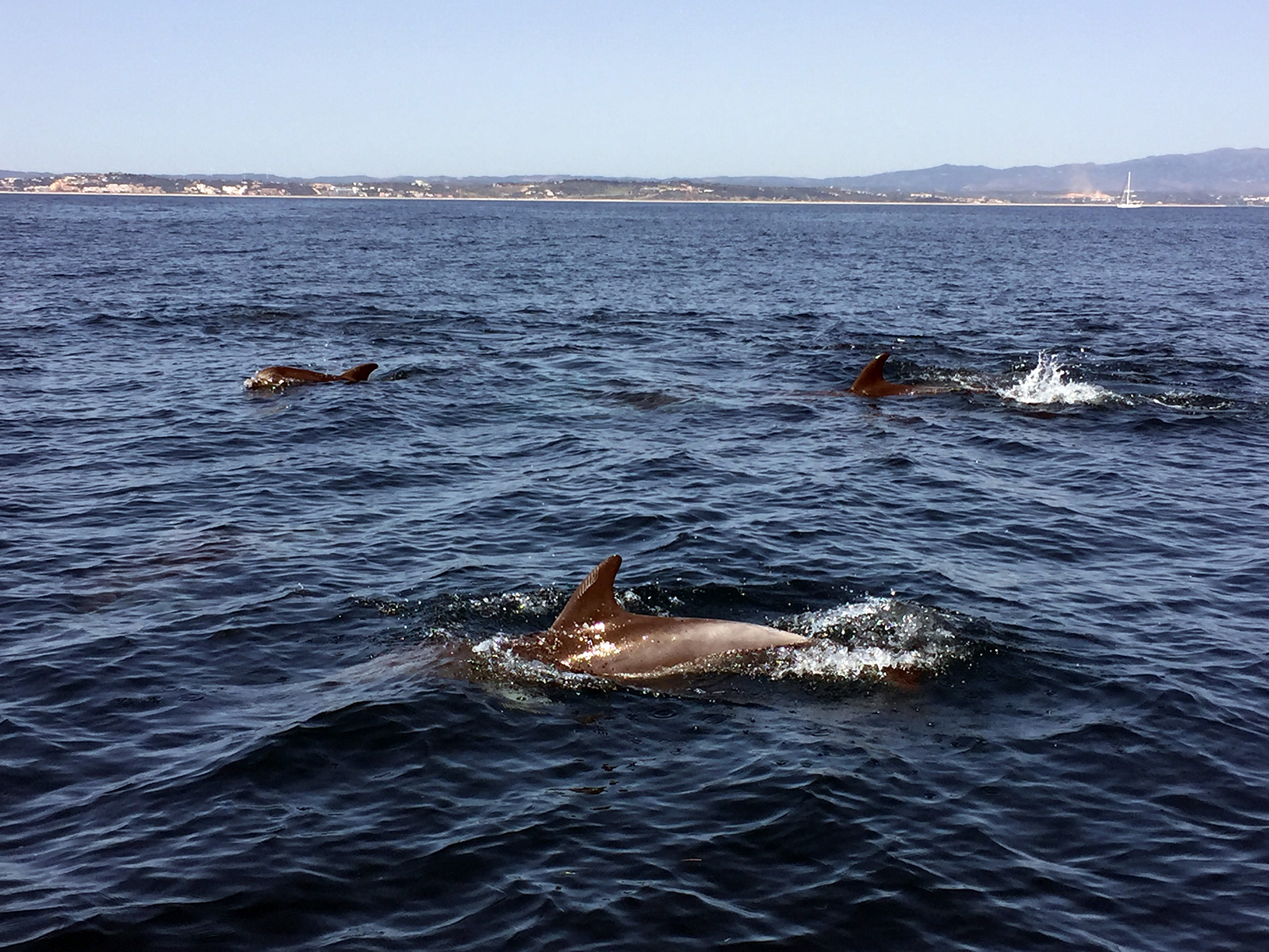 Dolphin Tour in Lagos, Portugal by Jets Like Taxis