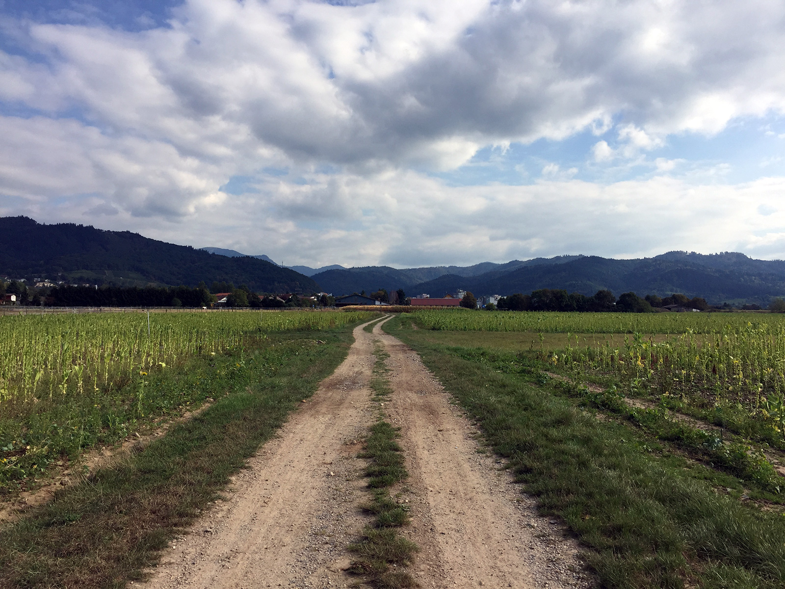 Staufen im Breisgau, Germany by Jets Like Taxis